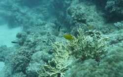 Korallenbänke unter Wasser
